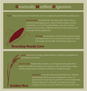 Genetically modified organisms essay