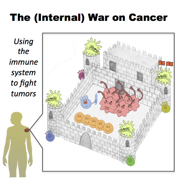 The Internal War On Cancer Using The Immune System To