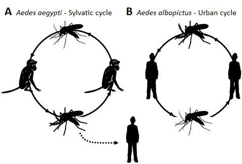 Chikungunya Virus On The Move