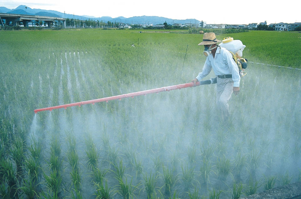 Image result for photo of pesticides