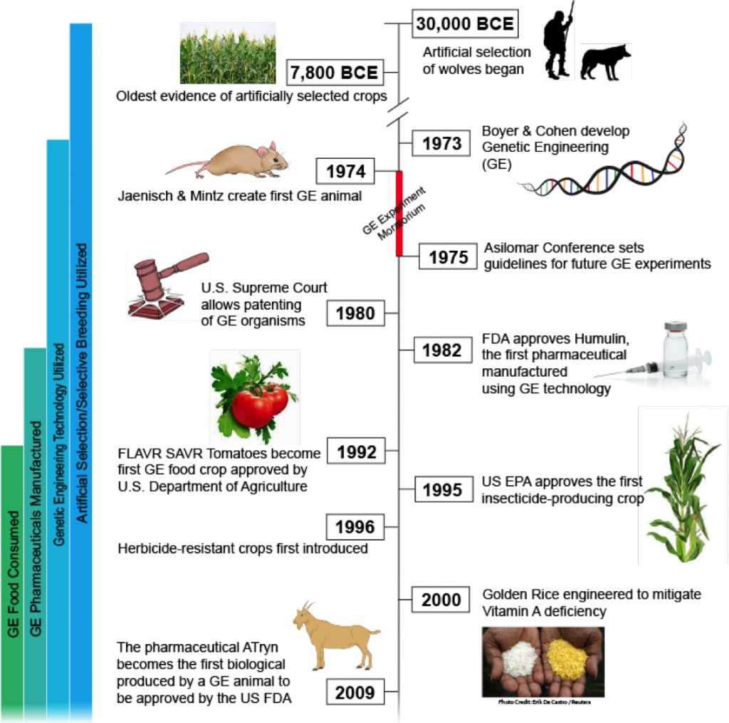 an analysis on the benefits and risks of genetic engineering Biotechnology, and the newer methods of genetic modification—genetic engineering and recombinant (r) deoxyribonucleic acid (dna) techniques and technologies can be very useful in pursuing important improvements in food production and the food supply and doing so much more readily and effectively than previously possible.