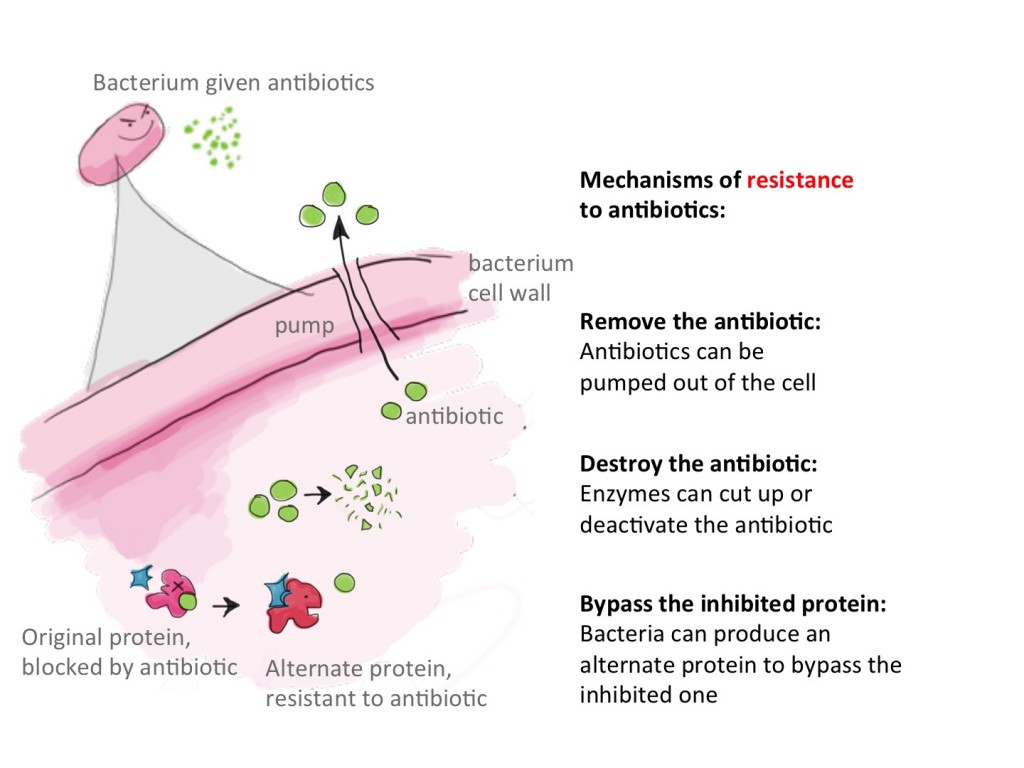 antibiotic resistance in bacteria essay Antibiotic resistance essaysantibiotics use to be the talk of the medical world just fifty years go, now the talk is about trying to find a better antibiotic than the.